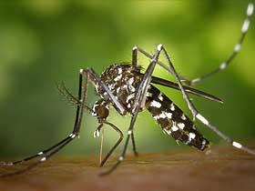 Mantar Sivrisinekleri
