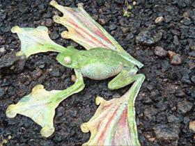 Kurbağaların Perde Ayakları