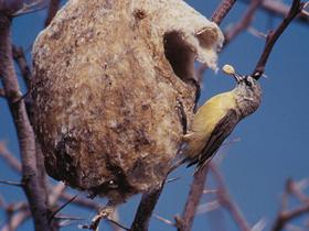 Güney Afrika Kuşları