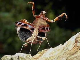 Mantislerin Yuvaları
