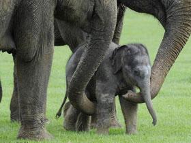 Canlıların birbirlerini korumaları
