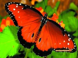 Kelebek kanatlarındaki estetik ve fonksiyonellik