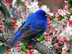 Kuşların Kuyrukları