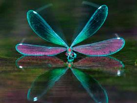 Böceklerdeki aerodinamik yapı