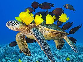 Deniz Canlılarının Fedakarlıkları
