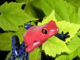 Kurbağadaki şaşırtıcı metabolizma, yeni tedavilere ilham kaynağı olabilecek