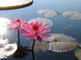 Su Bitlerinin Özel Göz Yapısı