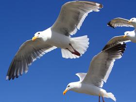 Deniz Martılarının Uçuş Yetenekleri