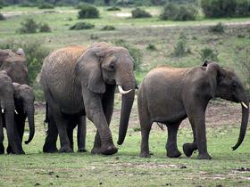 Fillerin İletişimi