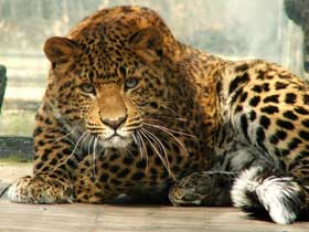 Hayvanların Başlarının Üzerinde Koyu Çizgi ve Benekler Niçin Var?