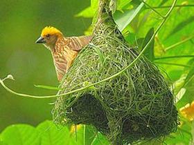 Kuşların Yuvaları