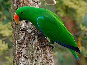 Papağan ve Balıkçıl Kuşların Temizliği