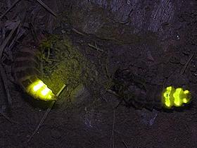 Böceklerin Işıkla Anlaşmaları