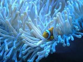 Denizlerde ortak yaşam