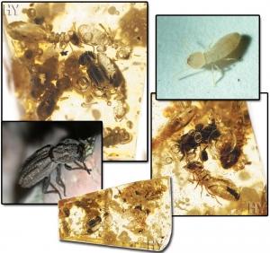 Demir Zırhlı Böcek ve Termit