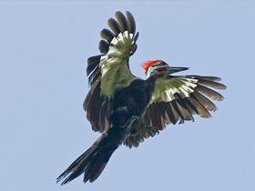 Kuşların Enerjisi