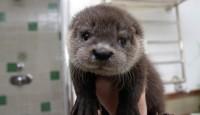 en güzel hayvan bebek resimleri burada!