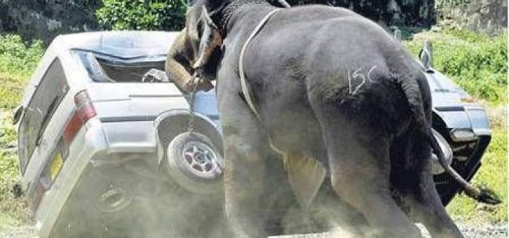 İnsanlara saldıran hayvanlar – Sabır sabır nereye kadar.. Hayvanlar Kızarsa böyle olur!