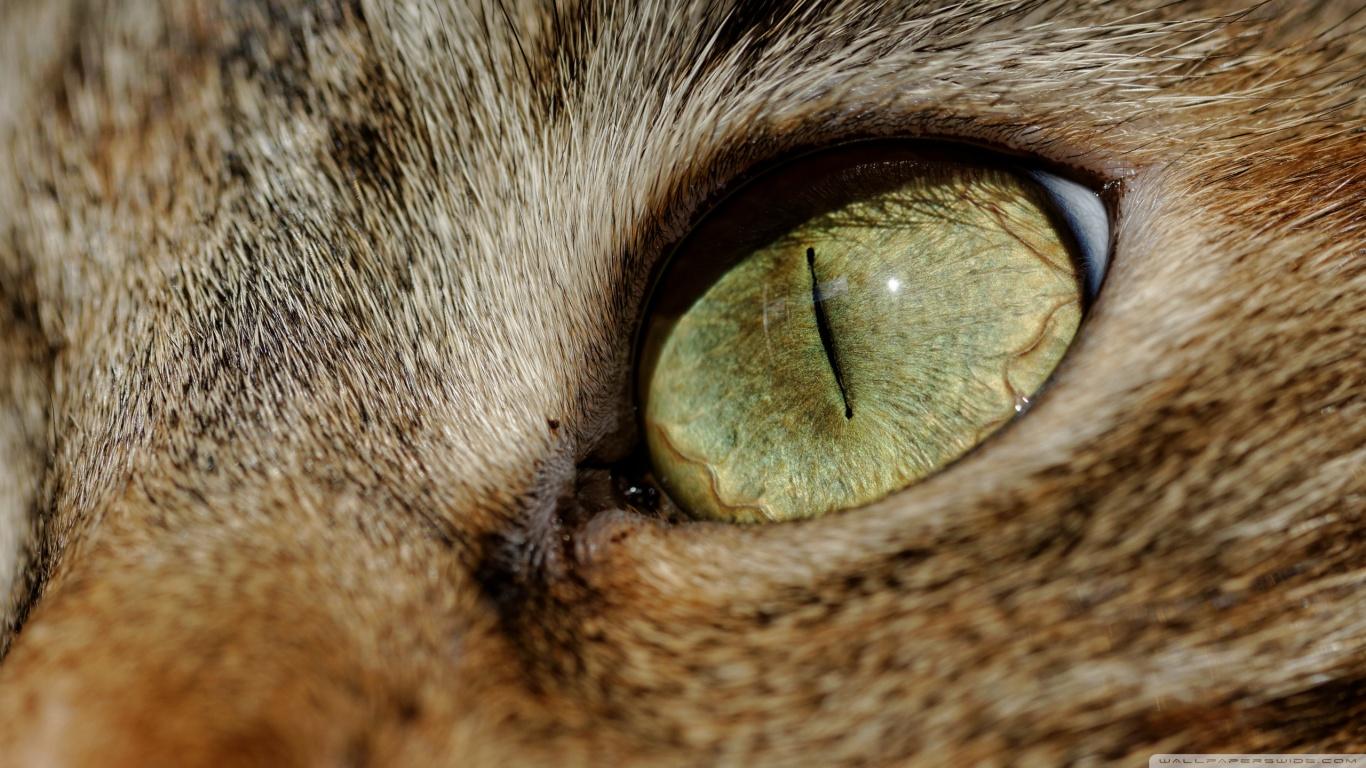 hayvanlaralemi1-com-kedi-gozu-yakin-cekim