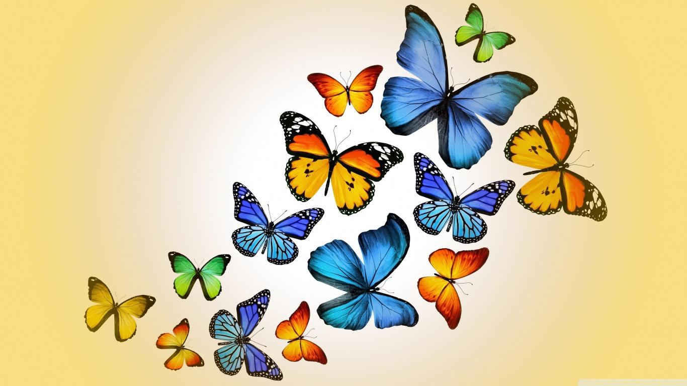 hayvanlaralemi1-com-kelebekler-1