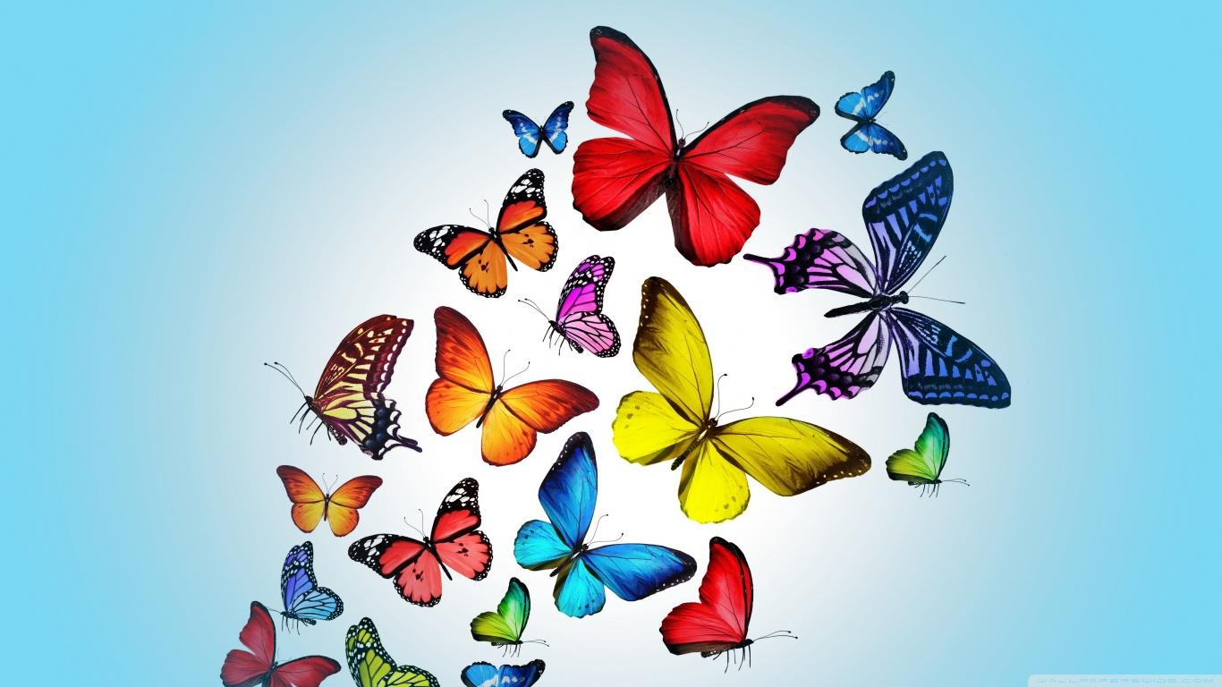 hayvanlaralemi1-com-kelebekler-2