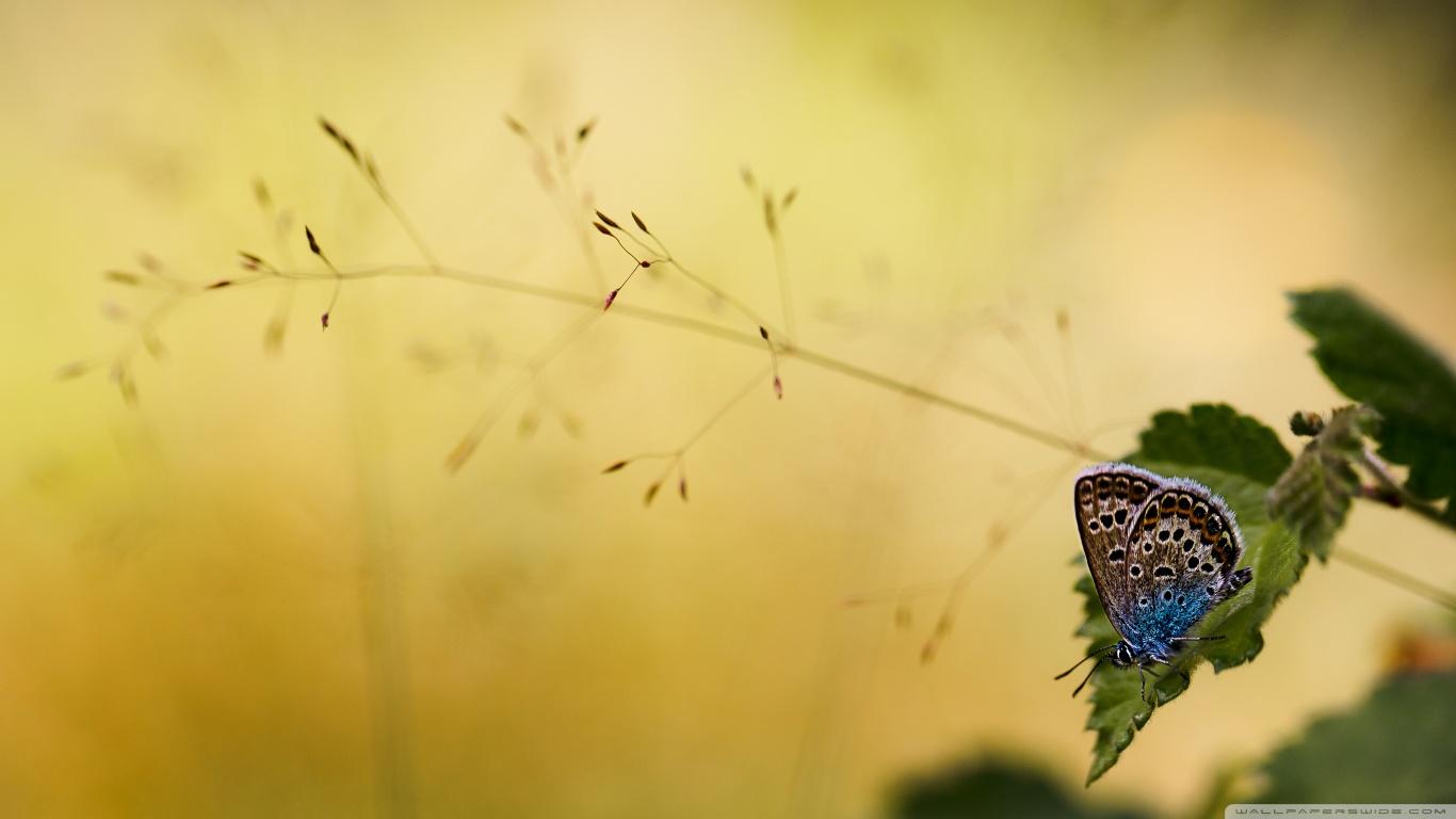 hayvanlaralemi1-com-kelebekler-3
