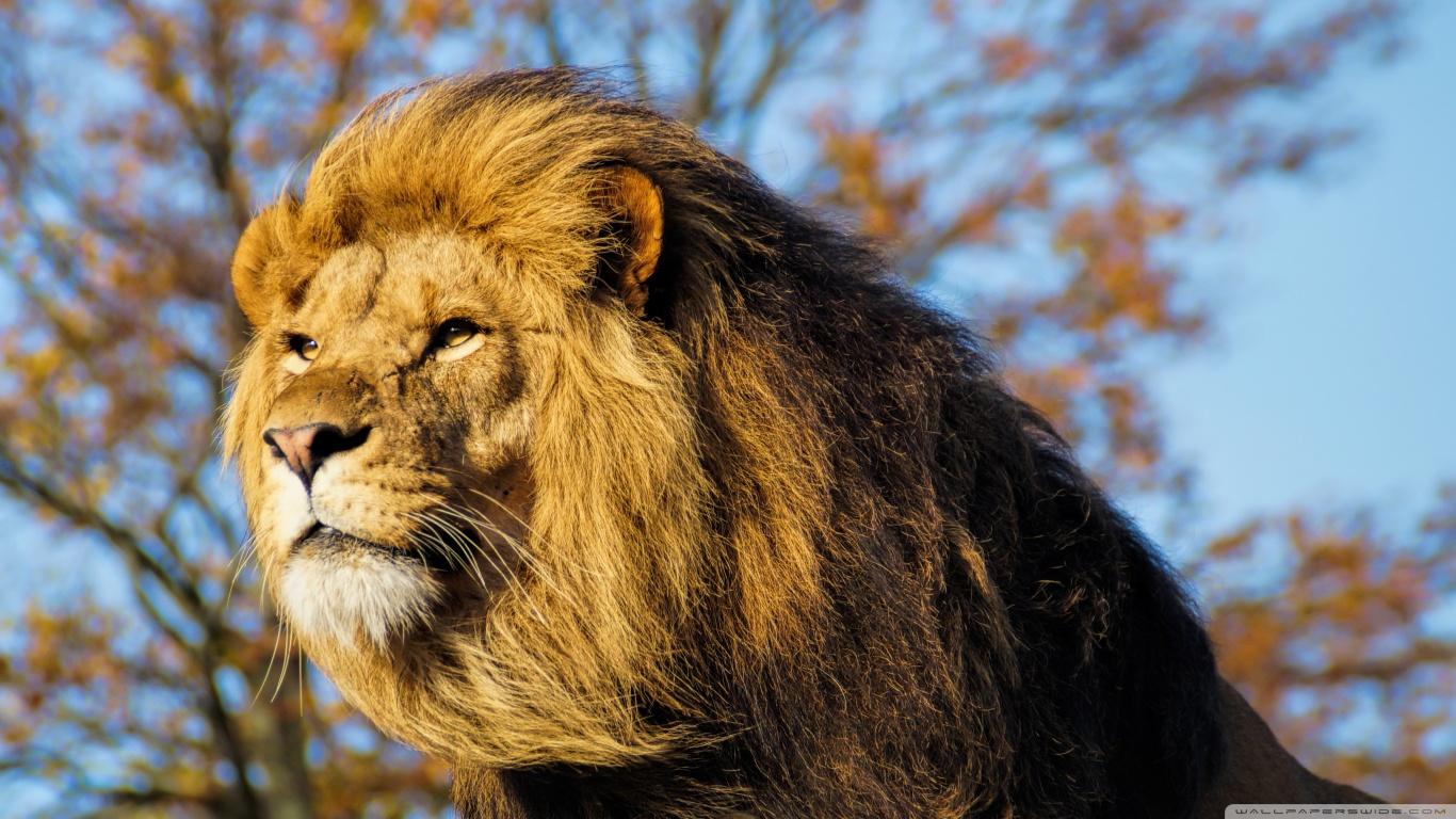 hayvanlaralemi1-com-ormanlar-krali-aslan