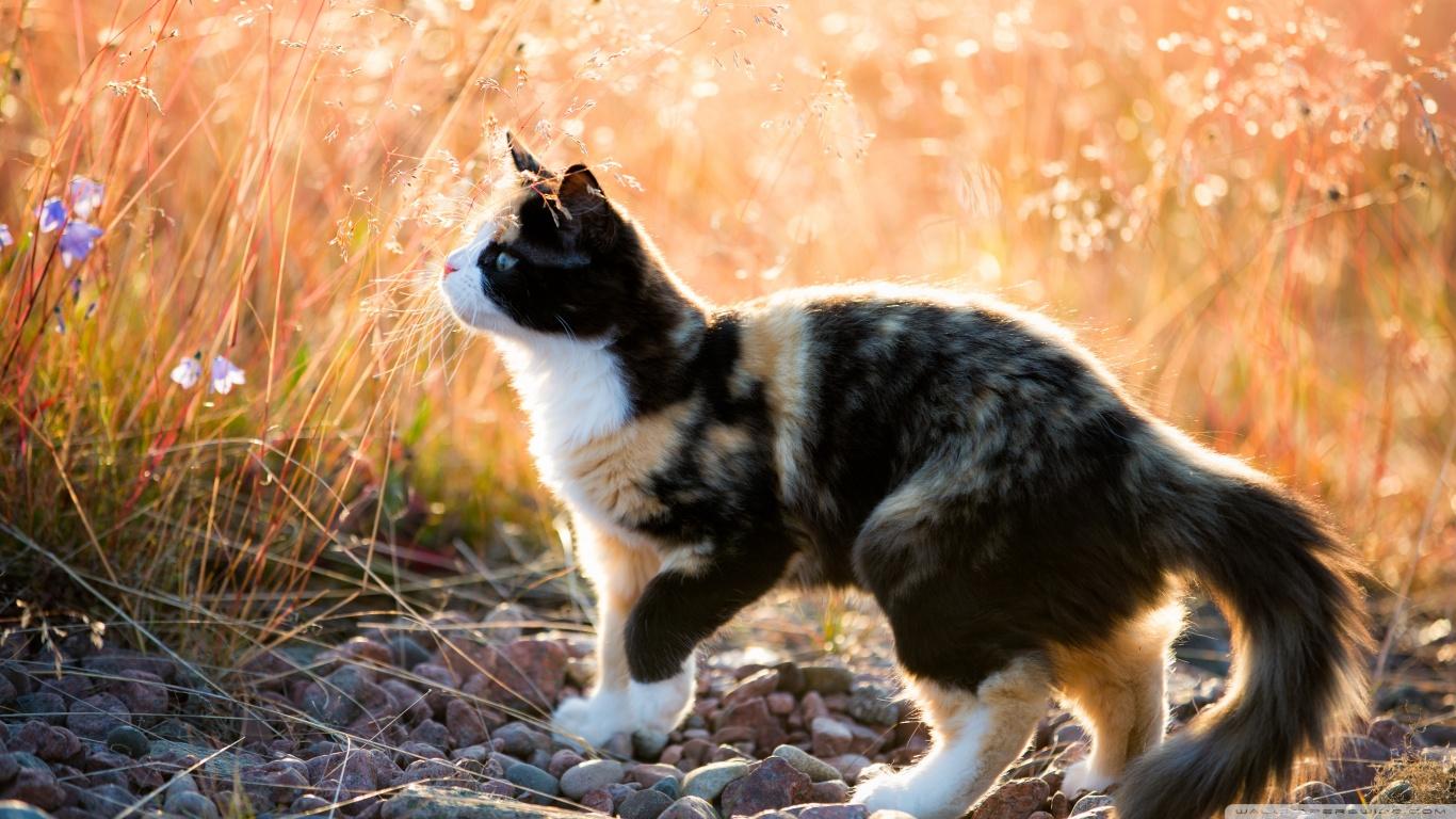 hayvanlaralemi1-com-yakin-cekim-kedi