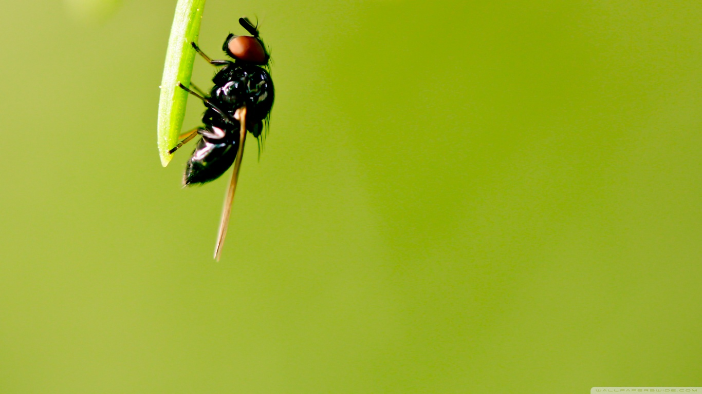 hayvanlaralemi1-com-yesil-yapraga-tutunmus-sinek