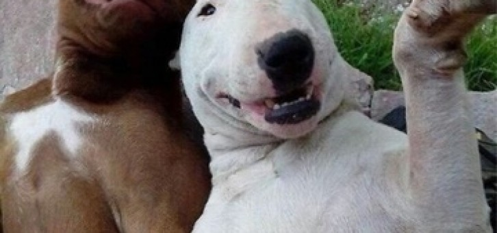 En güzel köpek resimleri burada!