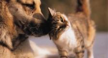 Hayvan Fotoğrafları 2