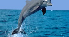 Yunusların Doğum Anı